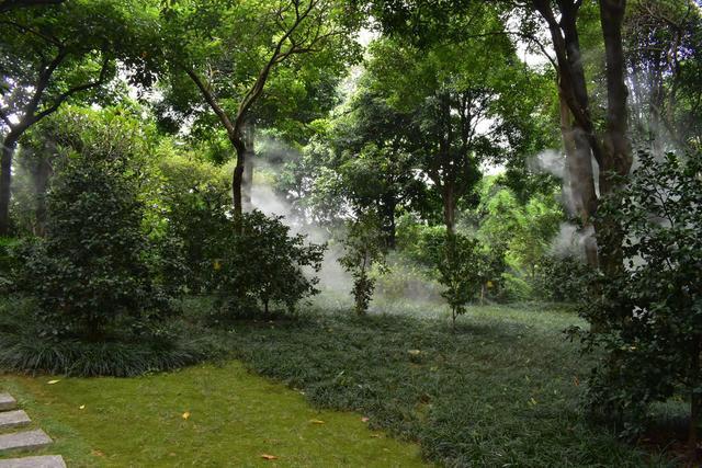 金花茶公園 (6).jpg