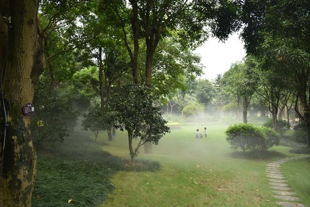 金花茶公園 (2).jpg