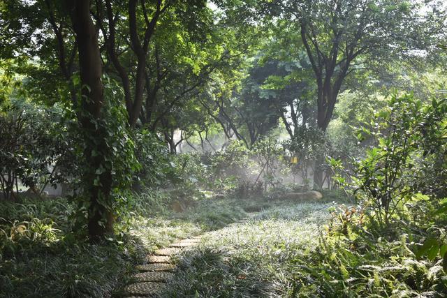 金花茶公園 (5).jpg