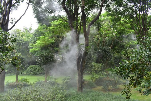 金花茶公園 (8).jpg