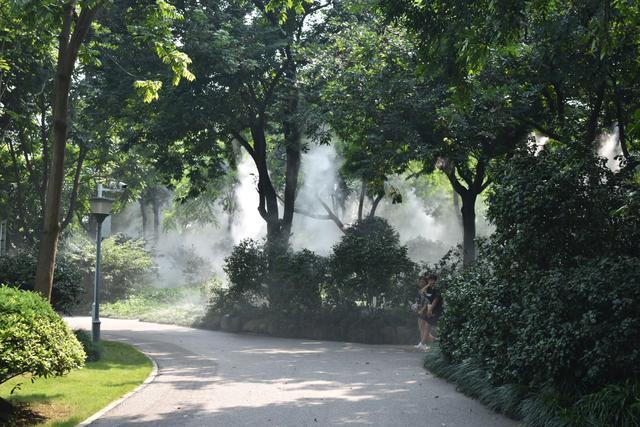 金花茶公園 (9).jpg